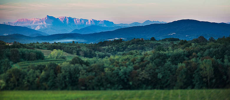 Abendlandschaft mit Tiefenschärfe im Weinanbaugebiet Colli Orientali del Friuli in der Nähe von Udine in Norditalien, Blick auf die Voralpen