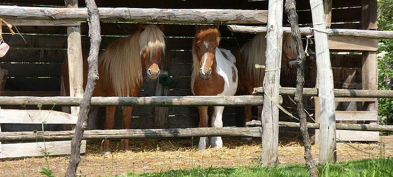 Italien-Suedtirol-Pferde in Eppan Berg auf dem Weingut Schloss Engla