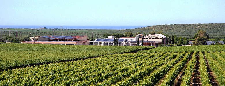 italien-WEin-Apulien-Rivera-Weingut mit Weinbergen in der Nähe von Bari