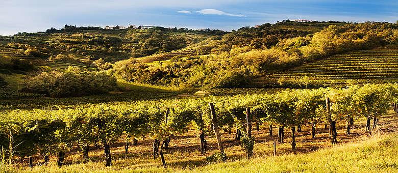 Weinlandschaft in der Nähe von Gorizia im Collio-Gebiet in Italien, im Friaul, nahe der slowenischen Grenz