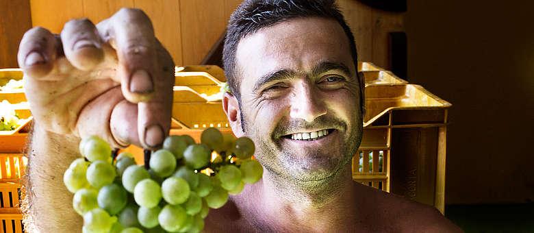 Chardonnay-Traube nach der Ernte im Keller von Villa in der Franciacorta, humorvoller Blick und Tiefenschärfe im Foto von Markus Bassler, WEINWELTEN