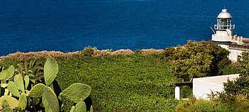 Weintourismus Sizilien