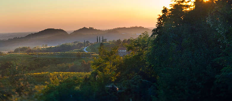 Sonnenuntergang im Weinanbaugebiet Colli Orientali del Friuli in der Nähe von Udine in Norditalien