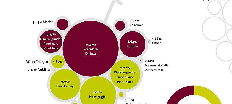Italien-wein-Suedtirol-Grafik mit Rebsortenanteilen in Suedtirol