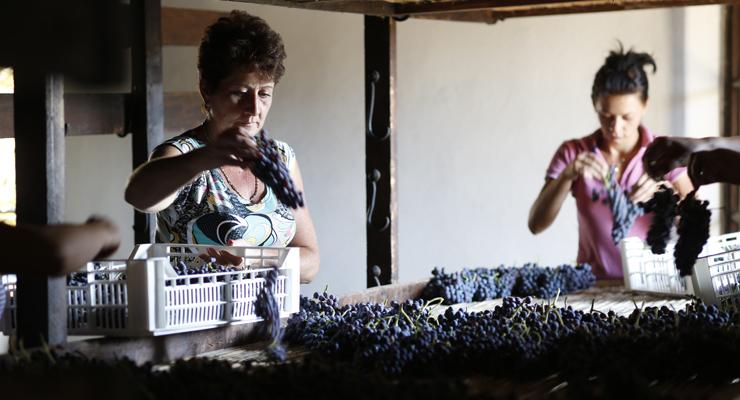 Italien, Weingut Bertani, zwei Frauen nach der Traubenlese bei der Arbeit,